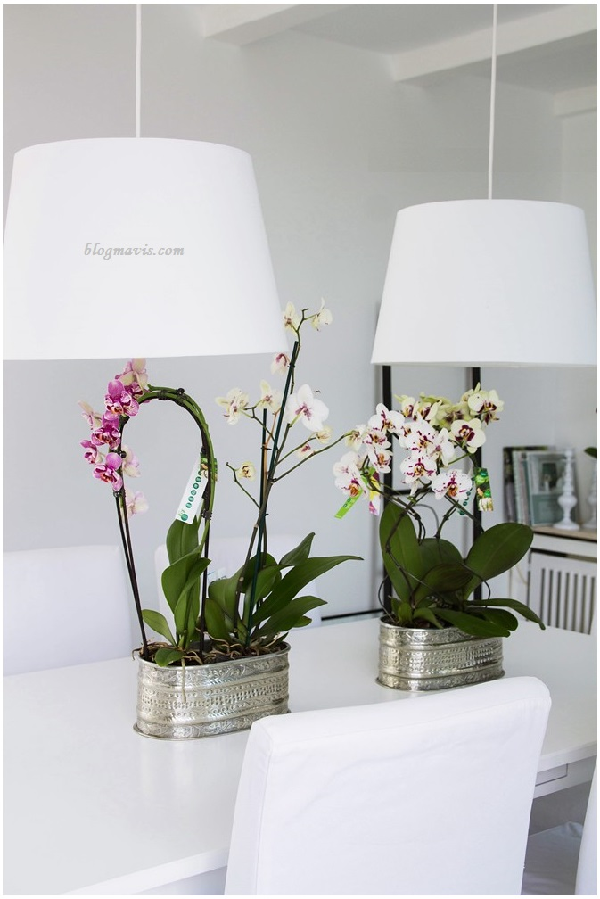 ORCHIDS AND THE DINING ROOM